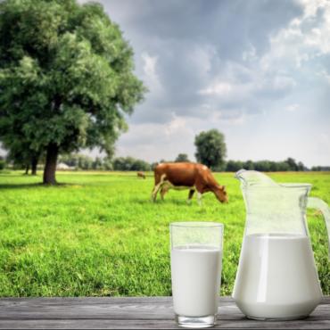 Le lait de vache : Bon ou mauvais pour la santé?