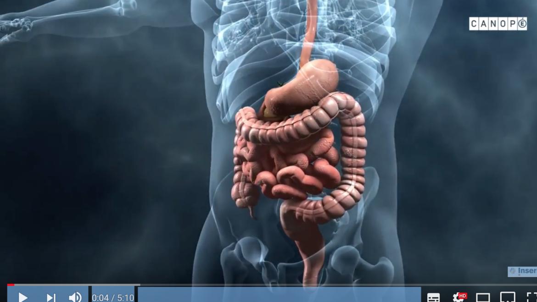 Corpus : Au cœur des organes. Le microbiote intestinal